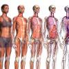 Esplorare il corpo umano in 3D con Zygote Body